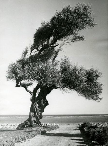 Les mondes méditerranéens :  vers une écologie de la création